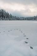 Footprints on ice on silent morning over frozen nameless lake and surrounding forests on snowy winter day in Vidzeme, near Nītaure, Vidzeme, Latvia Ⓒ Davis Ulands   davisulands.com