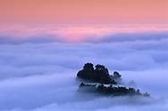 Fog and trees at sunrise in the Berkeley Hills, Alameda County, CALIFORNIA