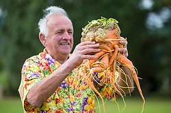 © Licensed to London News Pictures. 14/09/2018. Harrogate UK. Ian Neale with his prize winning heaviest carrot that weighed 4.29kg at the Giant Vegetable Competition today at the Autumn Harrogate Flower Show in Harrogate. Photo credit: Andrew McCaren/LNP