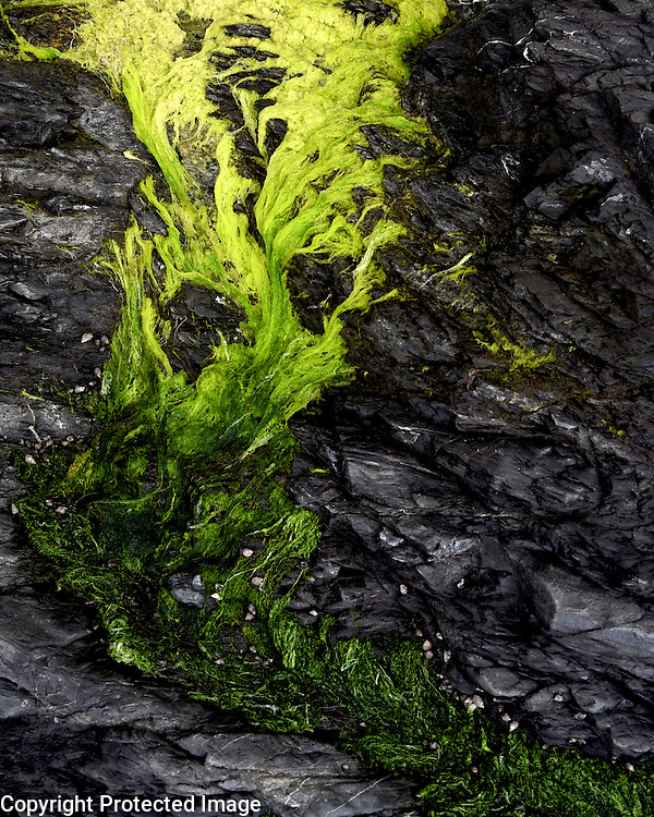 This naturally occurring flow of light to dark moss reminded me of an Andy Goldsworthy creation.