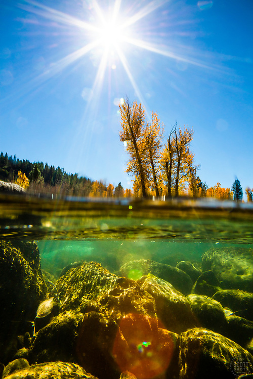 """""""Truckee River in Autumn 20"""" - Over/under autumn photograph of the Truckee River and yellow cottonwood trees in Downtown Truckee, California."""