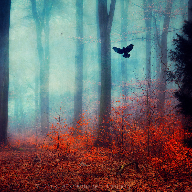 Dreamy forest scenery at the end of winter<br /> <br /> Licenses: http://www.trevillion.com/search/preview/bird-flying-in-autumnal-forest/0_00219886.html