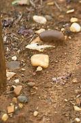 Soil detail. Stony. Sand. Chateau Liot, Barsac, Sauternes, Bordeaux, France