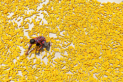 Aug. 7, 2017 - Chongqing, China - A farmer airs newly-harvested corn in Jinhe Village of southwest China's Chongqing Municipality.  (Credit Image: © Qu Mingbin/Xinhua via ZUMA Wire)