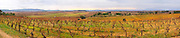 Minervois. Languedoc. Vineyards in winter with mountain range on the horizon. France. Europe. Mountains in the background.