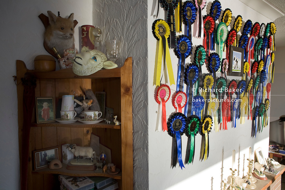 Rosettes and sheep competition mementoes adorn the wall and mantlepiece of champion breeder Vic Bull's crofting bungalow home overlooking Loch Bay, Waternish, Isle of Skye Scotland. Afternoon sunlight pours through a front window into his living room which serves as a shrine to the Sheep. Having already refused a half million Pounds for his house and spectacular view high up on a hill, he prefers to breed his beloved Blackface sheep which he shows only twice a year at local competitions in the Dunvegan area and the prizes and awards are proof of his success. Vic now lives alone rearing his livestock with four sheepdogs for training and company. Image taken for the 'UK at Home' book project published 2008..