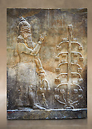 Stone relief sculptured panel of a Genie with poppy seed heads next ro the tree of life.  Inv AO 19869 from Dur Sharrukin the palace of Assyrian king Sargon II at Khorsabad, 713-706 BC.  Louvre Museum Room 4 , Paris .<br /> <br /> If you prefer to buy from our ALAMY PHOTO LIBRARY  Collection visit : https://www.alamy.com/portfolio/paul-williams-funkystock/ancient-assyria-antiquities.html  Refine search by adding background colour, place, subject, museum etc into the LOWER SEARCH WITHIN GALLERY box to <br /> <br /> Visit our ANCIENT WORLD PHOTO COLLECTIONS for more photos to download or buy as wall art prints https://funkystock.photoshelter.com/gallery-collection/Ancient-World-Art-Antiquities-Historic-Sites-Pictures-Images-of/C00006u26yqSkDOM