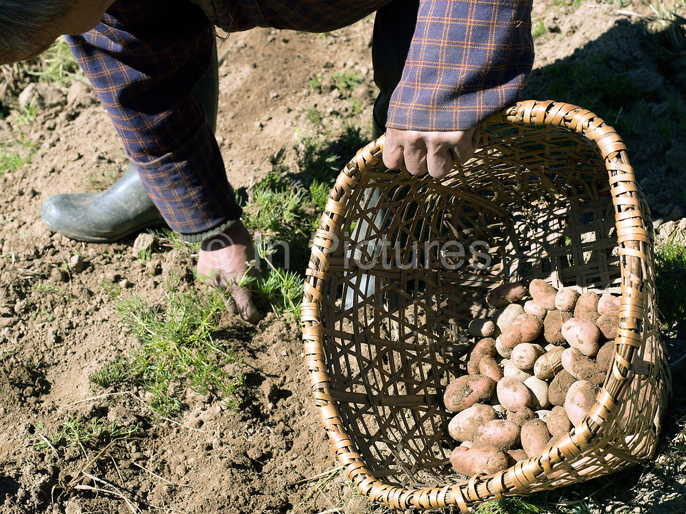 Bago, a farmer from Chubja harvests potatoes, Bhutan. Due to the decline of sheep farming, many farmers in Bhutan are turning to potatoes for the majority of their income.