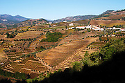 vineyards near quinta da gaivosa douro portugal