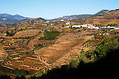 Douro River Valley and Vineyards - stock photo samples