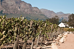 Dec. 04, 2012 - Vines in vineyard (Credit Image: © Image Source/ZUMAPRESS.com)