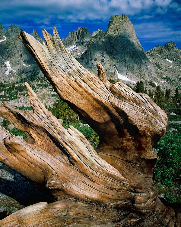 Weathered tree stump, Pingora Peak, August, Cirque of the Towers, Wind River Range, Popo Agie Wilderness, Shoshone National Forest, Wyoming, USA