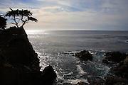 Lone Cypress Tree in Monterey
