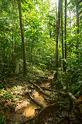 Landscape with view inside of a lush green rainforest, Indio Maiz Biological Reserve, Nicaragua
