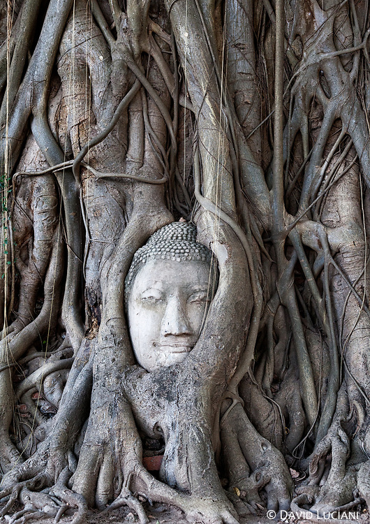 Buddha head surrounded by tree roots at Wat Mahathat in Ayutthaya.