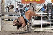 Union Sunday Bulls 18