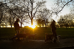 © Licensed to London News Pictures. 20/01/2020. London, UK. Dog walkers with their dogs are seen during a golden winter sunset in Finsbury Park, north London. Photo credit: Dinendra Haria/LNP