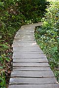 Wooden trail in rain forest