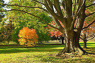 Brilliant shades of autumn, displayed by trees big and small, all sights to behold on a sunny October afternoon. Longenecker Horticultural Gardens in the UW-Madison Arboretum has more than 2,500 specimens of trees and shrubs. Photo taken October 18, 2019.