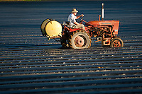A farmer prepares his strawberry fields in Ponchatoula Louisiana. The Morrow family has farmed their Tangipahoa parish land for seven generations.