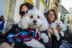 October 4, 2018 - Sao Paulo, Brazil - Parishioners accompanied by their pets attend a mass on the occasion of St. Francis of Assisi Day, in Sao Paulo, Brazil, 04 October 2018. St. Francis of Assisi is known in the catholic religion as the animals' protector. (Credit Image: © Cris Faga/ZUMA Wire)