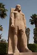 Rameses II colossal standing statue, carved in limestone, in Memphis, Egypt