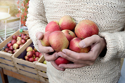 Mid section of a man holding apples in his hands in front of wholefood shop, Bavaria, Germany