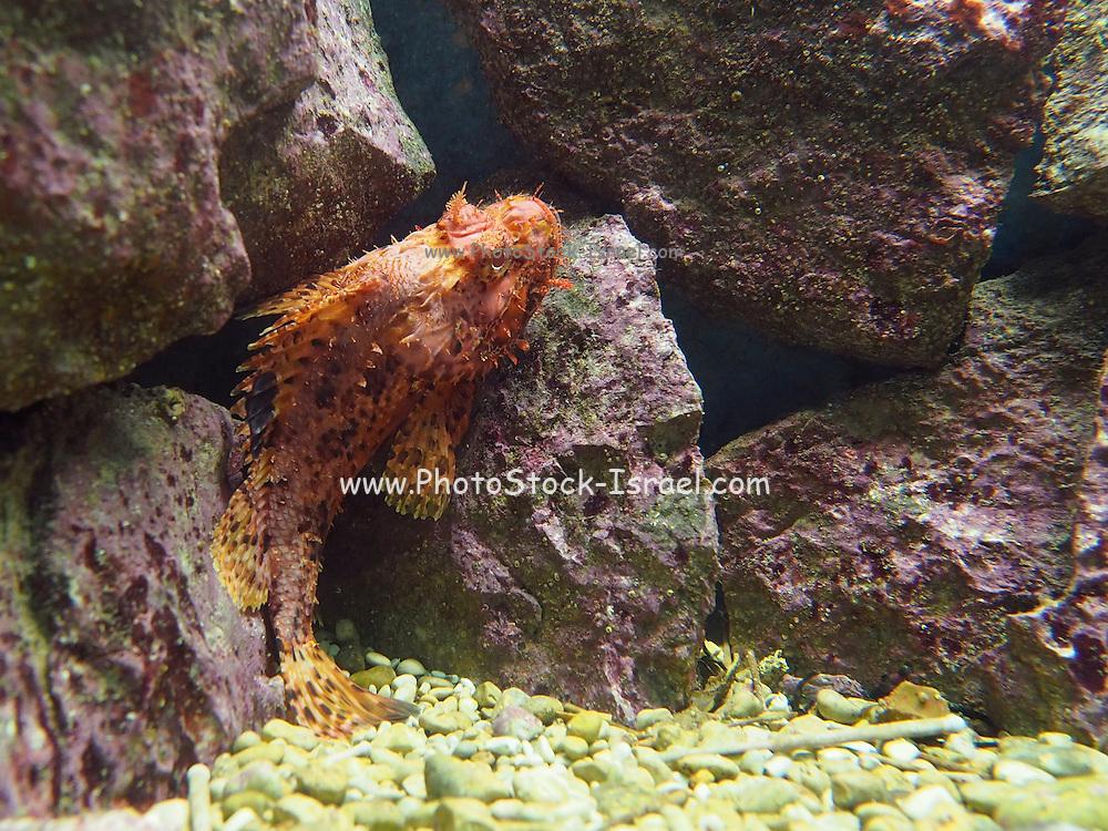 Exotic fish in an Aquarium