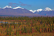 Alaska. Scenic autumn view looking north along the Denali Highway, with the spruce contrasting the brilliant fall tundra colors, and fresh snow on the Alaska Range.