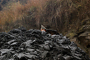 A coal miner working overground digs and carries coal in wicker buckets. Wangjiazhai, China