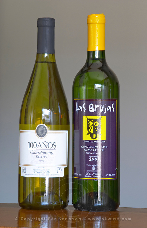 Bottles of 10 Anos Chardonnay Reserve 2004 and Las Brujax Vineyards Chardonnay Muscat Fine White Wine Canelones 2001 Bodega Plaza Vidiella Winery, Las Brujas, Canelones, Uruguay, South America