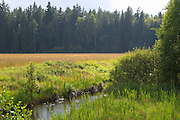 A meadow along a forest edge. Following a river. Smaland region. Sweden, Europe.