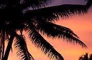 Palm trees silhouetted against sunset, Kadavu, Fiji.