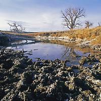A cattle-trampled water hole in the Missouri Breaks.