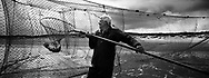 Salmon netter Bob Ritchie lifts a salmon through the pocket of a 'jumper' net at low tide on the sands at Kinnaber, Angus.<br /> Ref. Catching the Tide 33/00/31 (30th May 2000)<br /> <br /> The once-thriving Scottish salmon netting industry fell into decline in the 1970s and 1980s when the numbers of fish caught reduced due to environmental and economic reasons. In 2016, a three-year ban was imposed by the Scottish Government on the advice of scientists to try to boost dwindling stocks which anglers and conservationists blamed on netsmen.