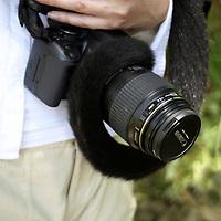 Central America, Latin America, Costa Rica. A Spider Monkey wrapped around a Canon SLR camera.