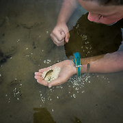 Boy plays with fish feeding from his hand.