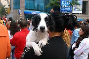 Sao Paulo_MG, Brasil...Mulher segurando um cachorro...The woman holding a dog...Foto: LEO DRUMOND / NITRO