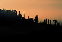 FILARE DI ALBERI IN COLLINA AL TRAMONTO, CASTEGNERO (VI), COLLI BERICI, VENETO, ITALIA