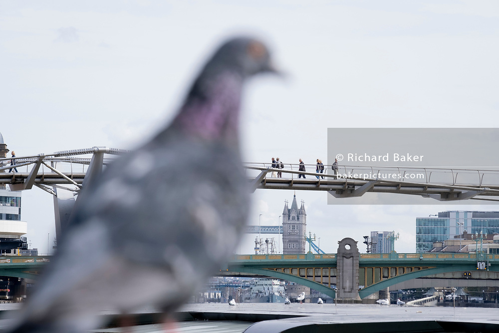 A foreshortened perspective of a pigeon and Tower Bridge in the far distance, and the nearer green Southwark Bridge, and Londoners cross the Millennium Bridge over the river Thames, on 13th September 2021, in London, England. London's newest river crossing for 100-plus years coincided with the Millennium in 2000. It was hurriedly finished and opened to the public on 10 June 2000 when an estimated 100,000 people crossed it to discover the structure oscillated so much that it was forced to close 2 days later. Over the next 18 months designers added dampeners to stop its wobble but it already symbolised what was embarrassing and failing in British pride. Now the British Standard code of bridge loading has been updated to cover the swaying phenomenon, referred to as 'Synchronous Lateral Excitation'.