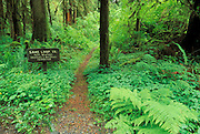 Sign at the start of the Sam's Loop Trail in the Queets Rain Forest, Olympic National Park, Washington