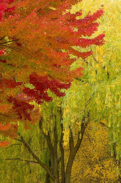Autumn trees, Pearrygin State Park, Washington, USA