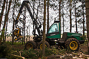 A John Deere Timberjack removing trees. The machine operated by Brian Nichols chops down and processes a tree ready for chipping in about 90 seconds. Suffolk county council sustainable wood chip production, Suffolk.