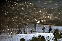 Queen's Park in Glasgow with people walking and bird in flight