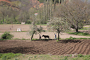 Greece, Macedonia, Gavros a small farming village Farms surrounding the village, ploughing the field in the traditional way with a horse and wooden plough