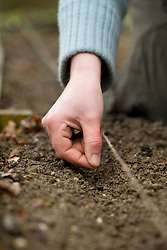 Seed sowing outdoors - sowing seed in a drill