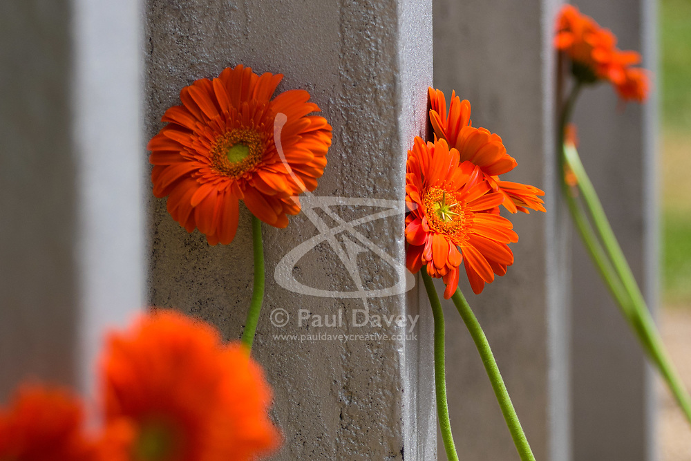 Hyde Park, London, July 7th 2017. A service is held as Londoners and survivors remember those lost in the Islamist terror attacks of July 7th 2005 at the Hyde Park Memorial, 12 years on. PICTURED: Orange Gerberas are laid against each post, bearing the name of one of those killed in the atrocities.