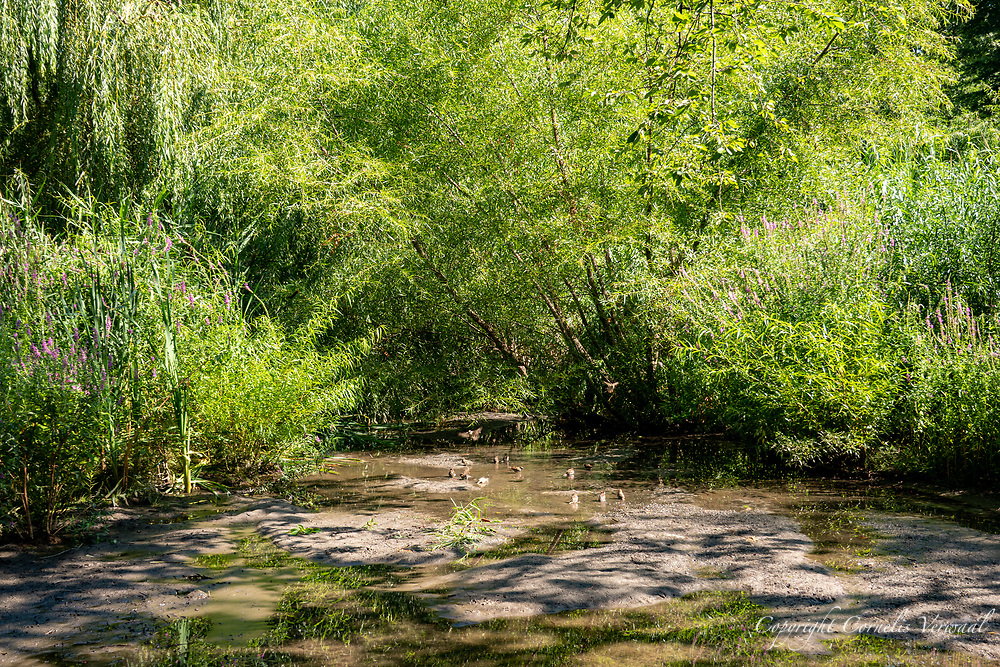 A marshy watering hole for the birds north of The Pond in Central Park