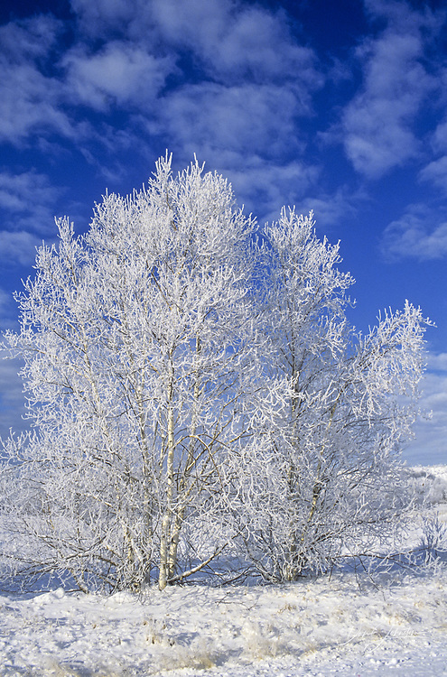 Frosted winter trees, Greater Sudbury, Ontario, Canada