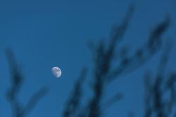 THEMENBILD - dreiviertel Mond durch dünne Zweige hindurch fotografiert, aufgenommen am 27. Jänner 2018, Zell am See, Österreich // three quarter moon photographed through thin branches on 2018/01/27, Zell am See, Austria. EXPA Pictures © 2018, PhotoCredit: EXPA/ Stefanie Oberhauser